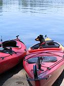 istock Kayaking Miniature Pinscher 91718947