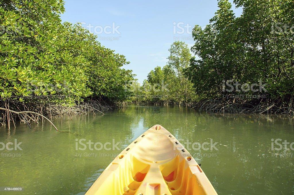Kayaking through mangrove forest stock photo