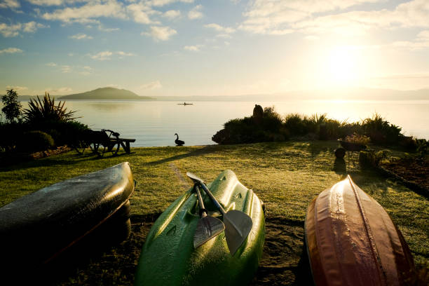 Kayaks, Lake Rotorua, North Island, New Zealand Sunset on Lake Rotorua with a black swan and a kayaker. rotorua stock pictures, royalty-free photos & images