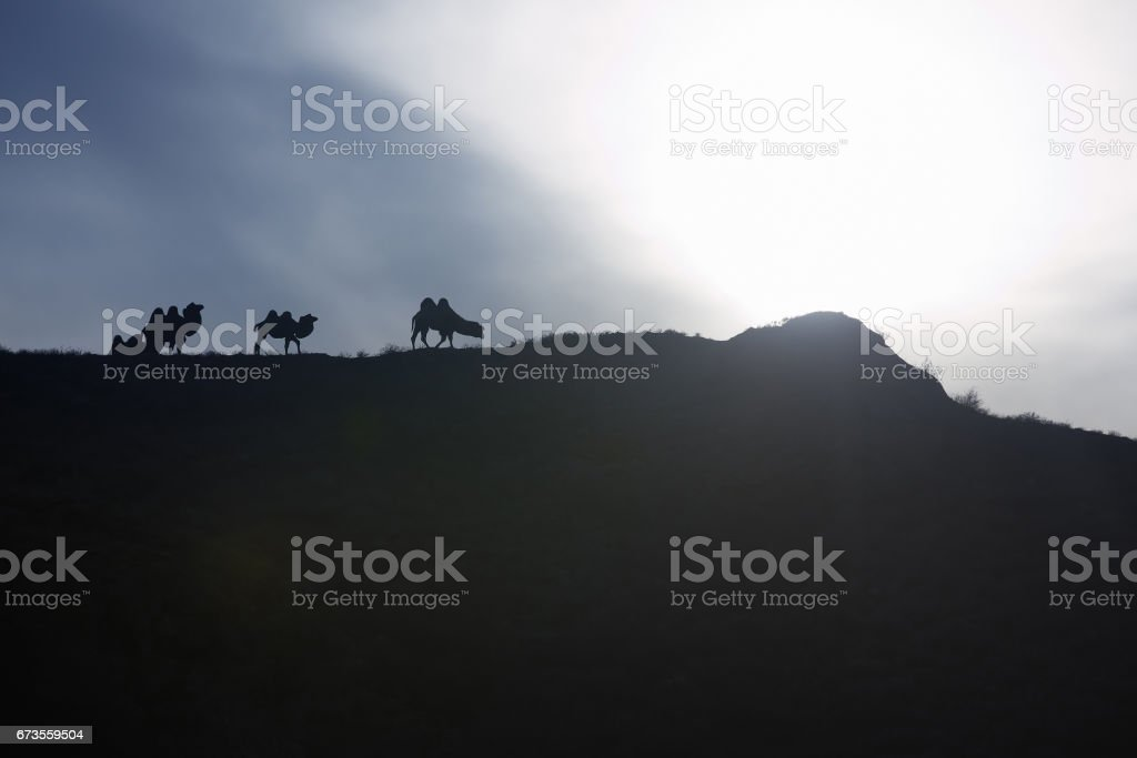 Kazakhstan - Silhouettes of camels pasturing on the hill at sunset, royalty-free stock photo