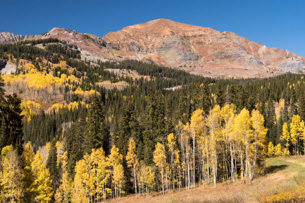 Kebler Pass Scenic Road in Gunnison National Forest Colorado. stock photo