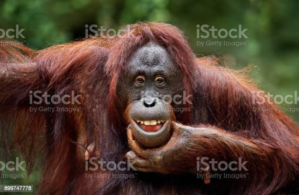 Keep smiling picture id899747778?b=1&k=6&m=899747778&s=612x612&h=wfosrclowtxop7qpokdkrtdwrgpbowlgqerzdp8qydy=