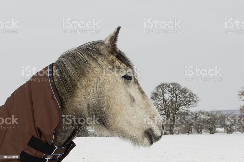 Keep warm in winter! royalty-free stock photo