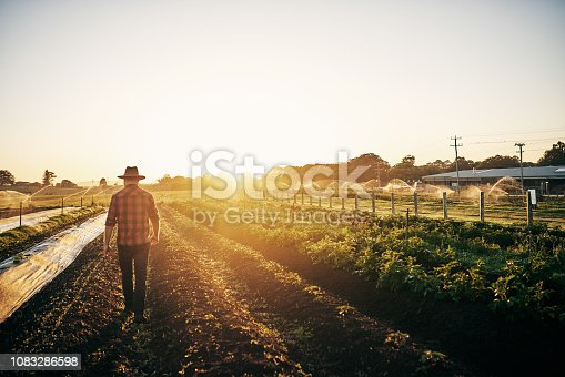 Rearview shot of a male farmer tending to his crops on the farm