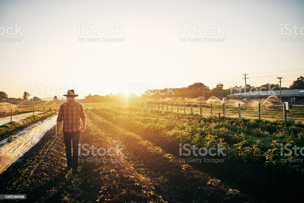 Keeping a close watch on his crops stock photo