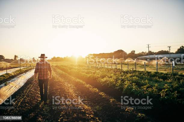 Photo of Keeping a close watch on his crops