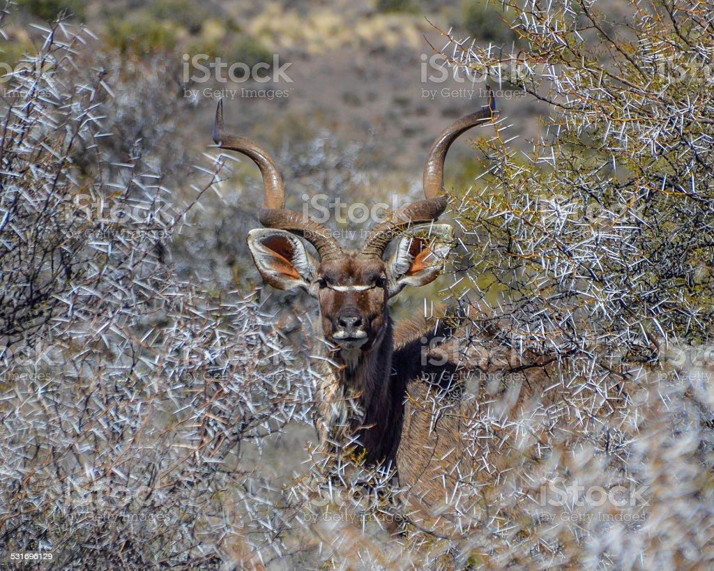 Keeping A Watchful Eye stock photo
