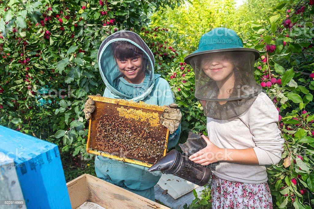 Keeping bees stock photo