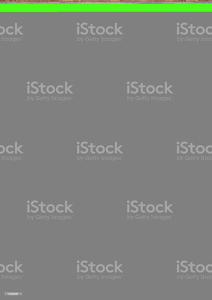 Keeshond stock photo