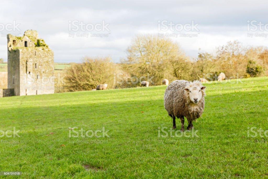 Kells Priory Ireland stock photo
