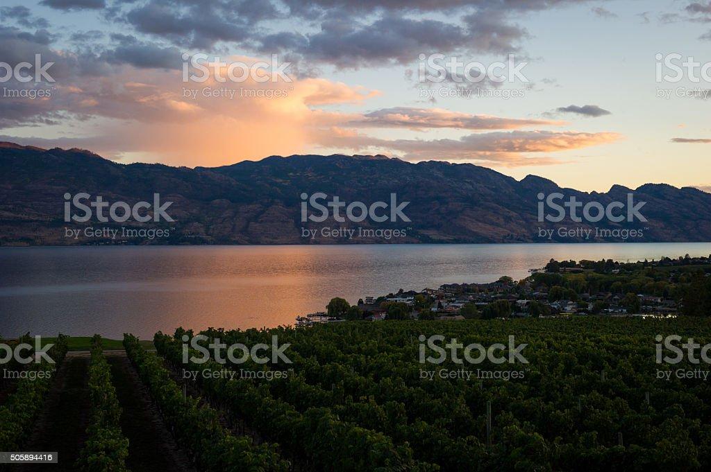 Kelowna vineyard and Okanagan Lake at sunset stock photo