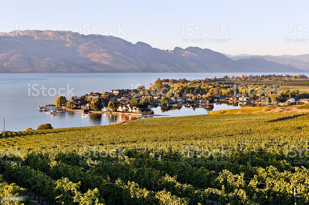 Kelowna Vineyard Winery Okanagan Valley stock photo