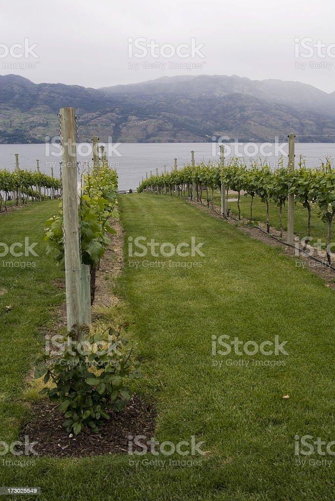 Kelowna Winery royalty-free stock photo