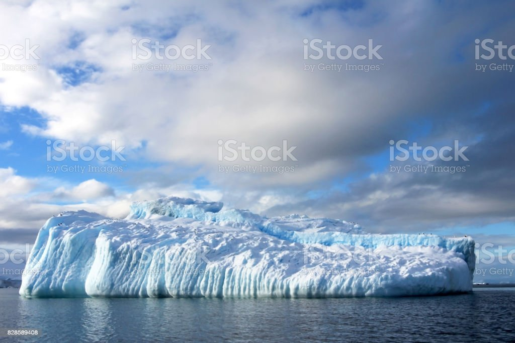 Kelp Gulls and Arctic Terns flying and sitting on iceberg, Antarctic Peninsula stock photo