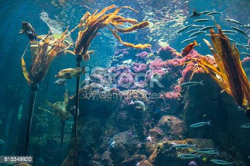 istock Kelp reef 815349920
