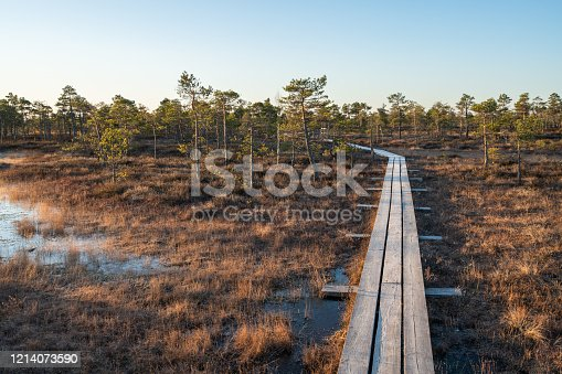 Wooden path in Kemeri National Park, Latvia