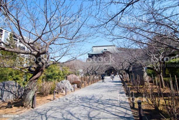 Kenchoji temple picture id948559796?b=1&k=6&m=948559796&s=612x612&h=rftisbyohmnibvfdnywciacjgiqffrgv0uakyvja3dk=