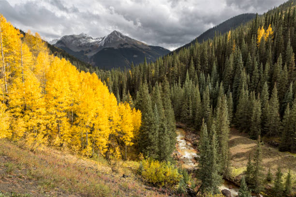 Kendall Mountain, Silverton, Colorado Autumn aspens show off Kendall Mountain on a rainy day in Silverton, Colorado. san juan county colorado stock pictures, royalty-free photos & images