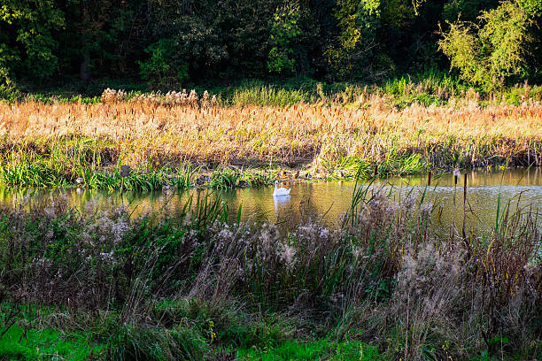 kenilworth - nature reserve stock photos and pictures