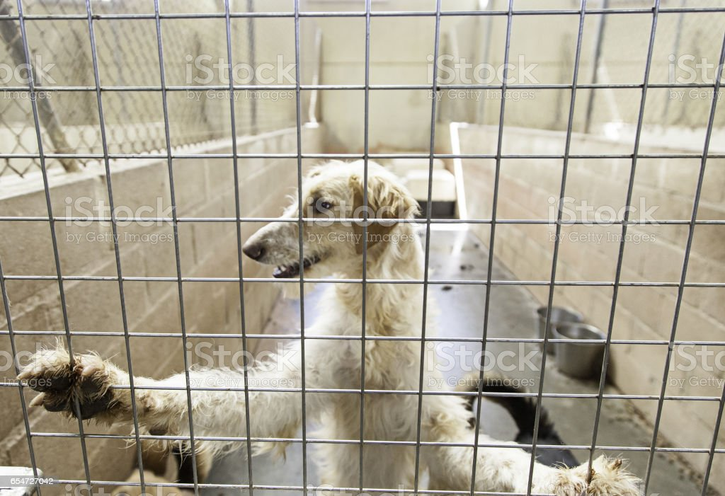 Kennel dogs locked stock photo