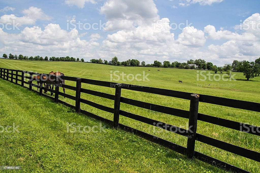 Kentucky Bluegrass Country stock photo