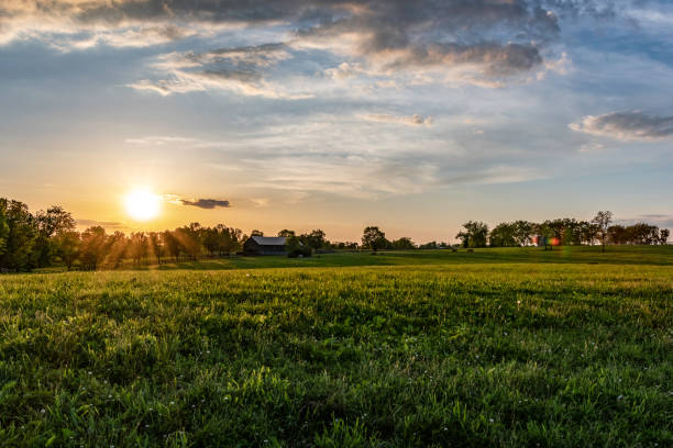 Kentucky horse farm landscape Kentucky horse farm at sunset on a spring evening. Barn and horses grazing at the far end of the bluegrass pasture lit with golden hour sunlight. rural scene stock pictures, royalty-free photos & images