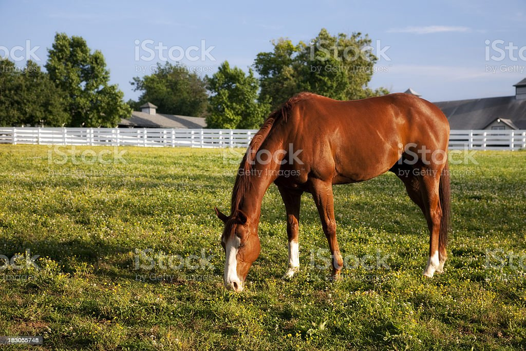 Kentucky Horse stock photo