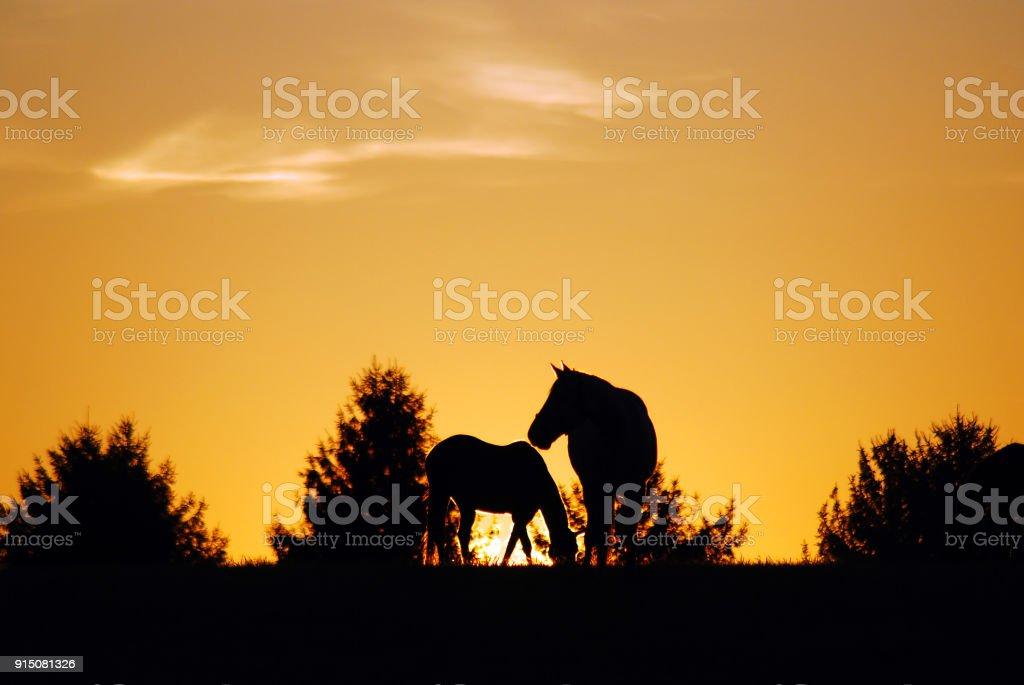 Kentucky Sunrise stock photo