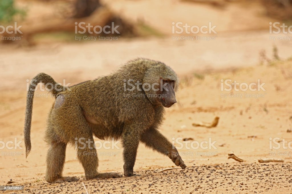 Kenya 2015 stock photo