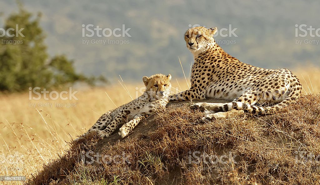 Kenya - August 11, 2010 stock photo