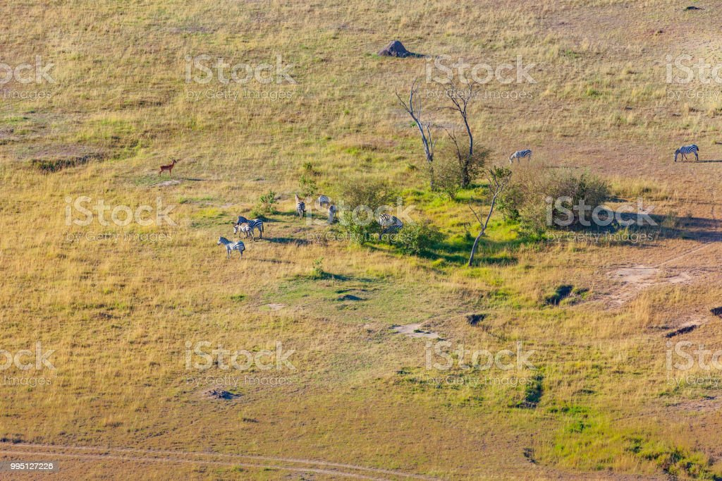 Kenia, Ostafrika - eine kleine Herde Zebras gesehen Beweidung auf die Masai Mara National Reserve im morgendlichen Sonnenlicht Schuss aus Heißluftballon – Foto