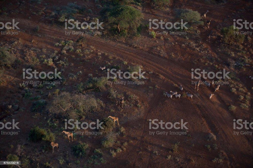 Kenya from the air photo libre de droits