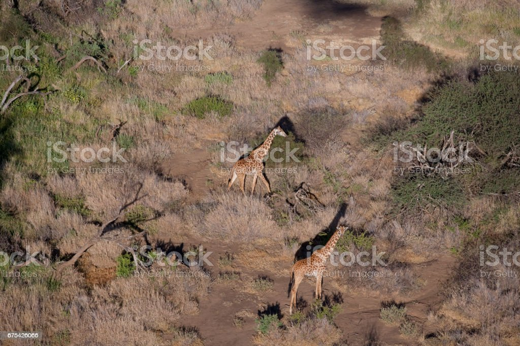 Kenya from the air royalty-free stock photo