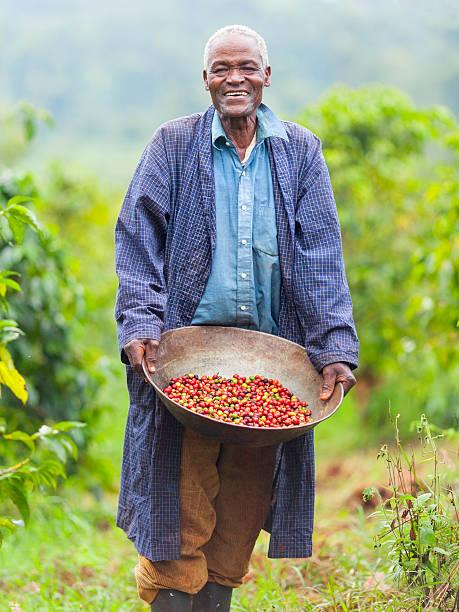keniota commercio equo caffè agricoltore - coffee farmer foto e immagini stock