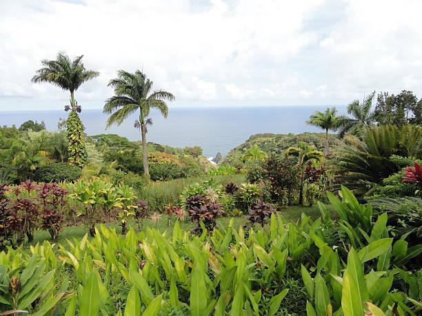 keopuka rocha vista, na tropical jardim de eden, maui, havaí - jardim do eden - fotografias e filmes do acervo