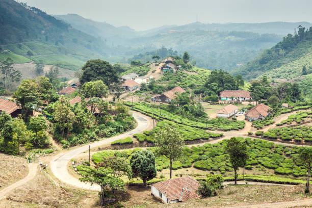 Kerala Tea stock photo