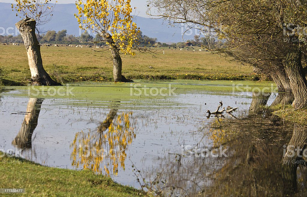 Kerkini lake in Greece royalty-free stock photo