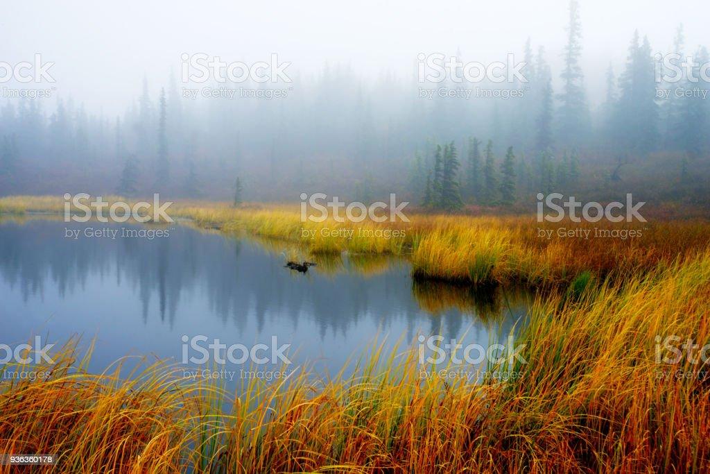 A kettle pond in Alaska under dense fog and golden grass. stock photo
