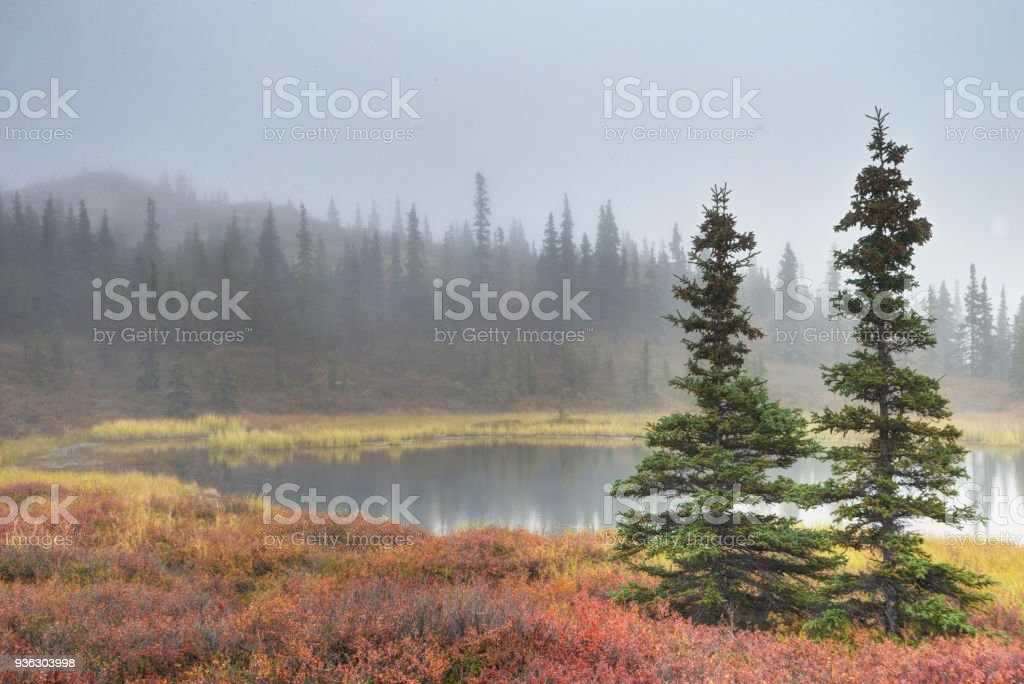 Kettle pond in fog in early morning light. stock photo