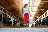 Young worker of livestock farm walking along two stables with cows after work