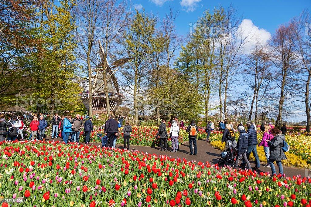 Keukenhof Park in Lisse, Netherlands stock photo