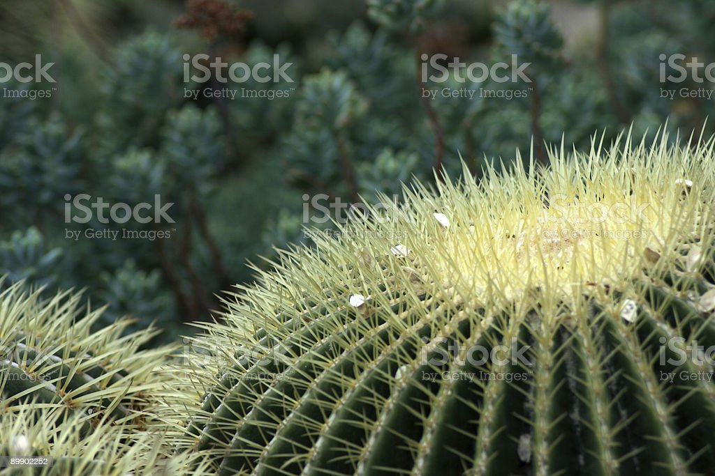 Kew Gardens - Cactus royalty-free stock photo