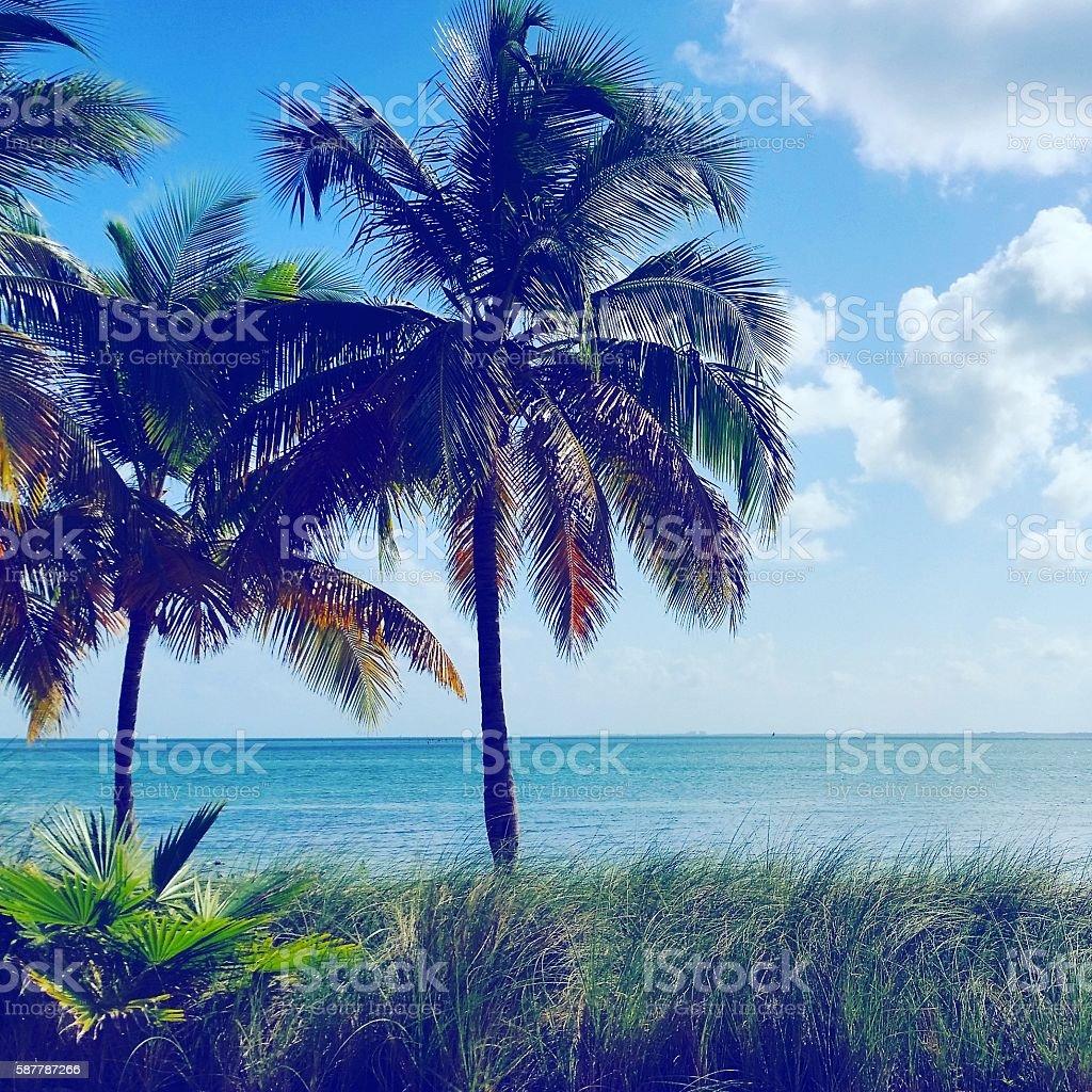 Key Biscayne Palm Trees on Florida Bay Beach Miami Florida stock photo