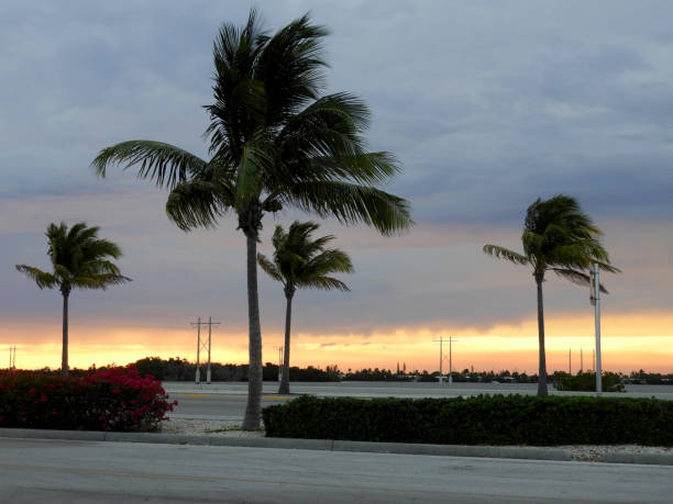 Key West Sunset with Palm Trees stock photo