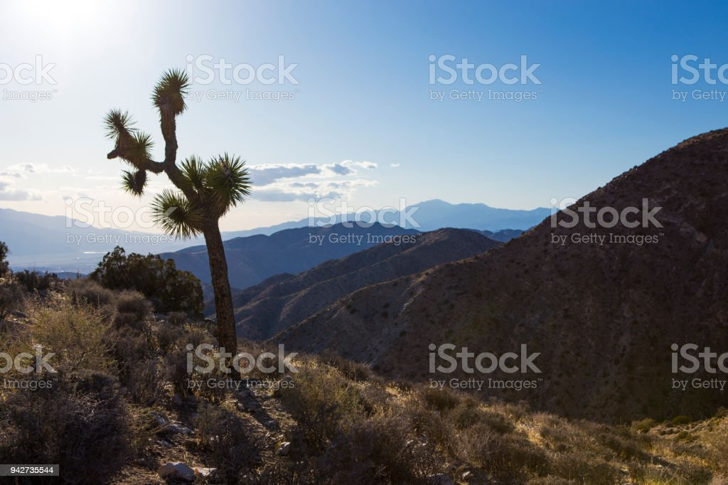 Keys View In Joshua Tree National Park Stock Photo - Download Image Now