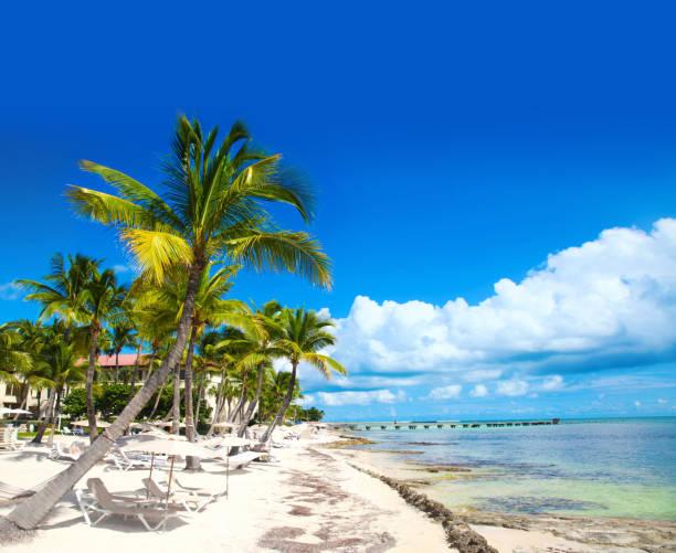 KeyWest Florida Strand Palme – Foto