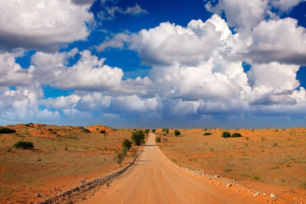 kgalagadi landskap, sand och grus roasd. solig varm dag i afrika. kgalagadi transfrontier park, sydafrika. orange och röd sanddyn med grön vegetation. blå himmel med moln, afrika - gemsbok green bildbanksfoton och bilder