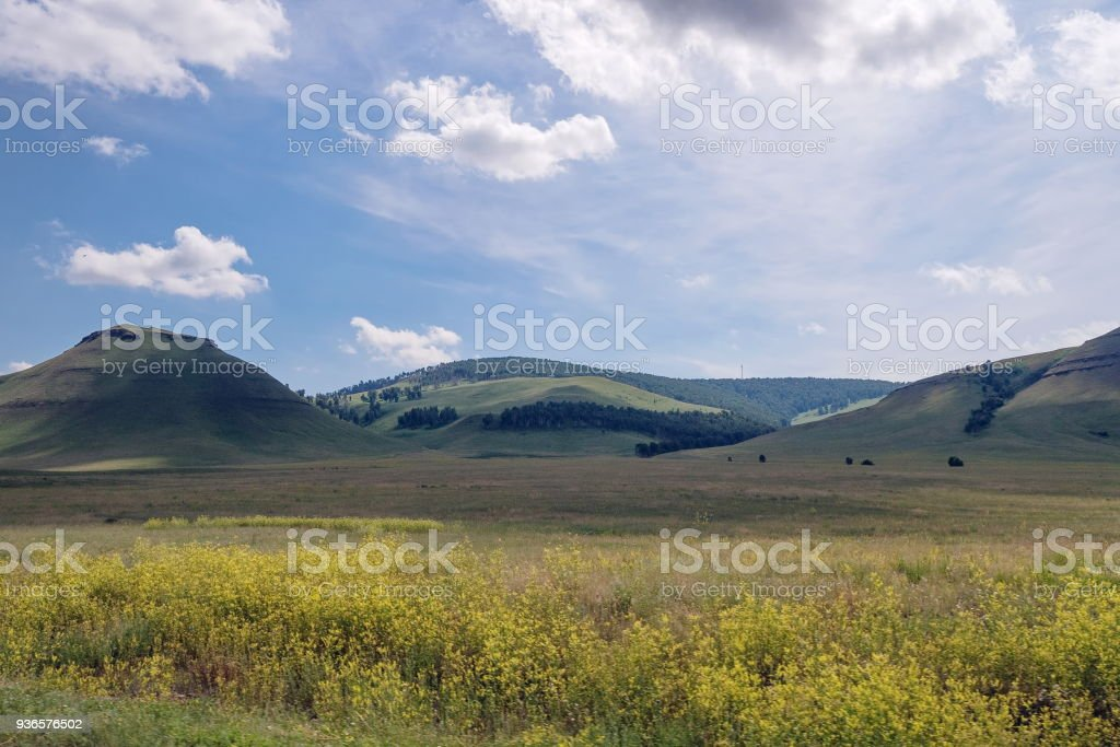 Khakass landscape with a blooming yellow flowers of a meadow on the background of wooded mountains. stock photo