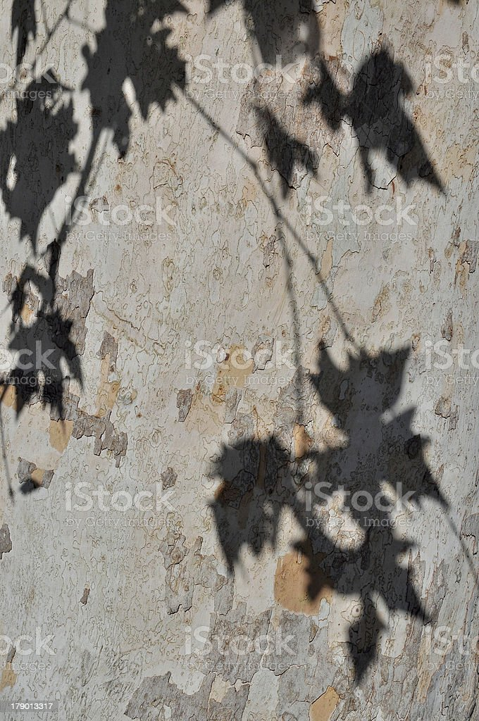 Khaki tree with shadow of the leaves royalty-free stock photo
