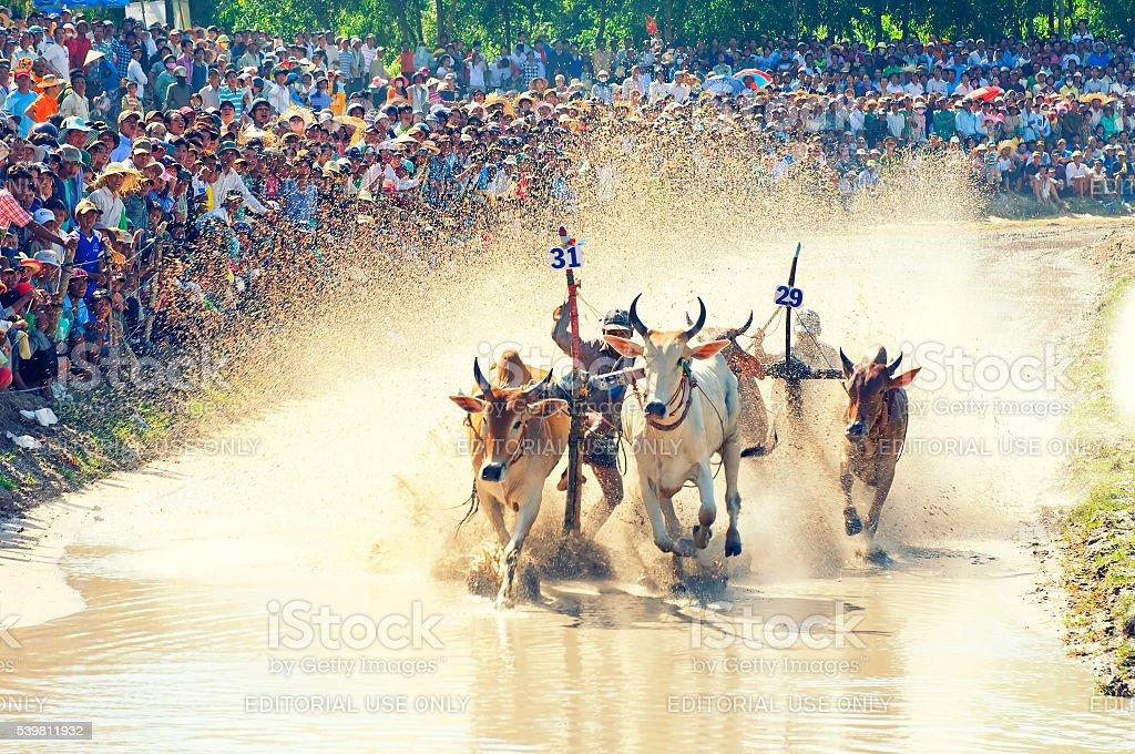Khmer bull racing festival in Mekong Delta, An Giang, Vietnam stock photo